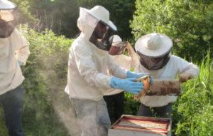 La division d'une ruche